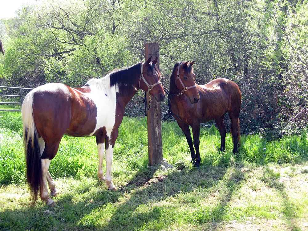rancho alena cattle company